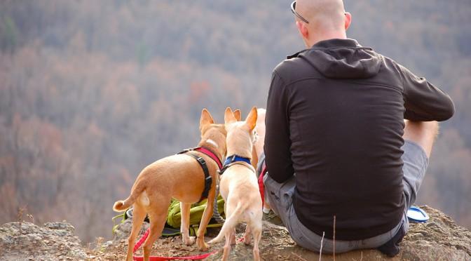 Flytta utomlands med hund