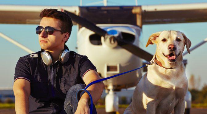 Att flyga med sin hund